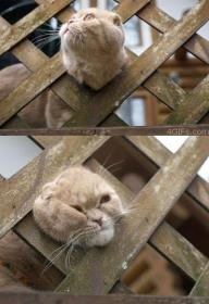 cat gets stuck in fence